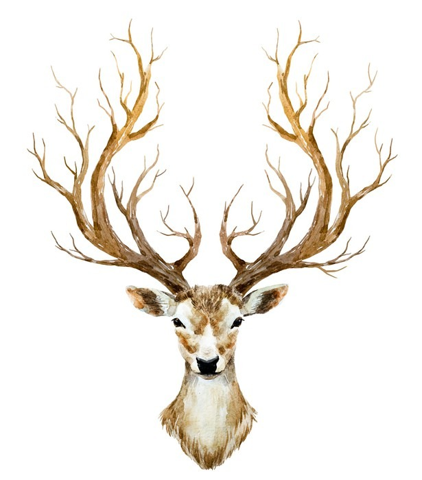 Watercolor hand drawn deer Framed Poster - Animals