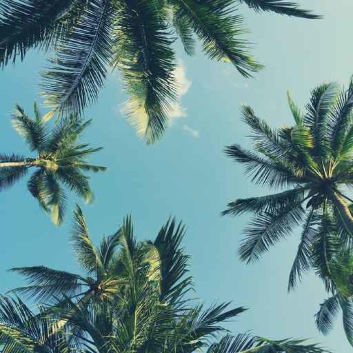 Vinylová fototapeta Palmy na krásné pozadí oblohy - Vinylová fototapeta
