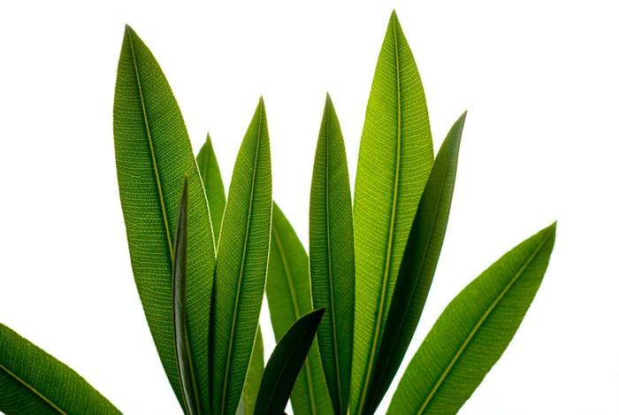feuillages Vinyl Wallpaper - Plants