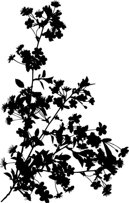 Vinylová Tapeta Čtyři větve černá třešeň - Květiny