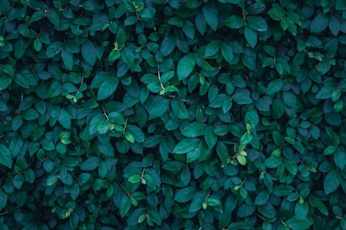 Cuadro en lienzo hoja fondo verde oscuro pixers - Color verde hoja ...