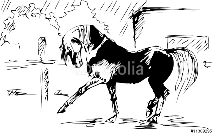 Horse spanish step - vector sketch Vinyl Wallpaper - International Celebrations
