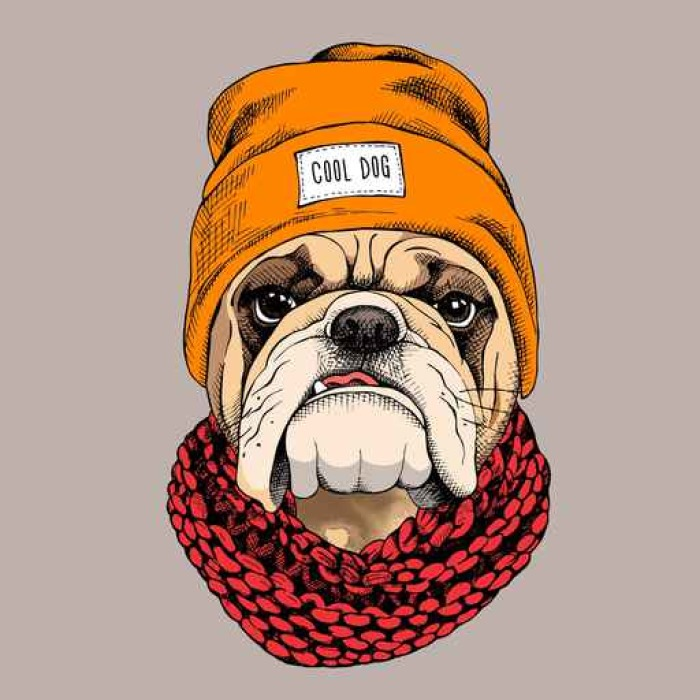 Vinylová Tapeta Bulldog portrét v bederní klobouku as pletená šála. Vektorové ilustrace. - Zvířata