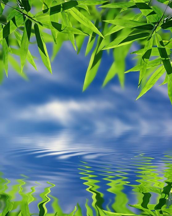 papier peint bambou et le ciel qui se refl te dans l 39 eau ambiance zen pixers nous vivons. Black Bedroom Furniture Sets. Home Design Ideas