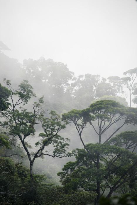 Papier Peint Vinyle Forêt jungle brumeuse - Paysages