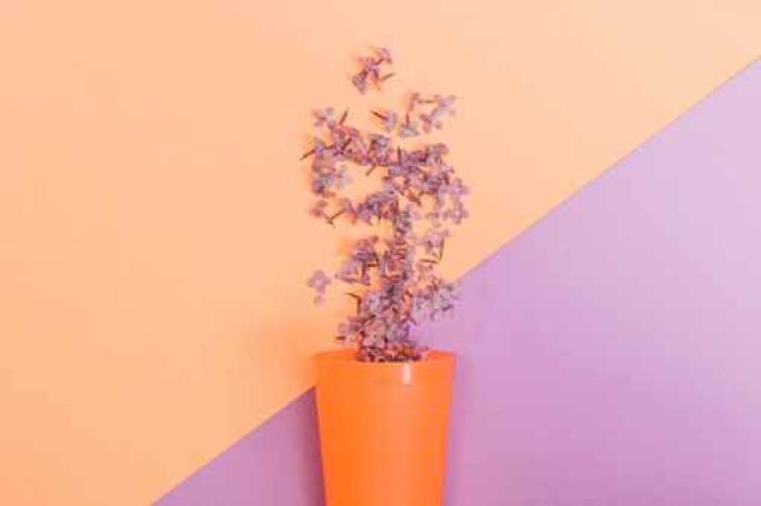 Vinylová Tapeta Plochá sada: Lilaci květiny nalité ze skla na pastelovém pozadí. Pohled shora. - Rostliny a květiny