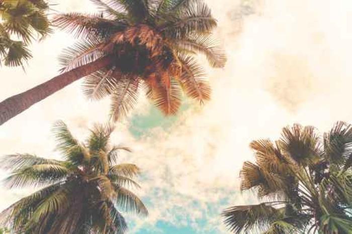 Adesivo Paesaggio Natura Sfondo Della Riva Tropico Palme Da Cocco A