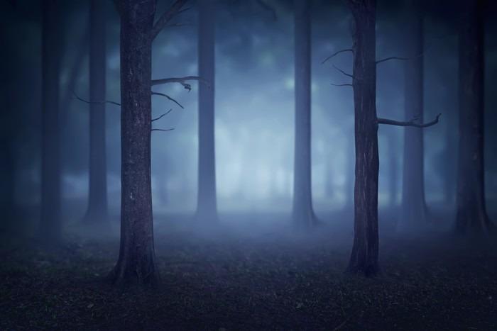 Vinylová Tapeta Forest se spoustou stromů a mlhy - Krajiny
