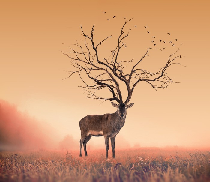 tableau sur toile conceptuel cerf deer un arbre sec cerf rouge cerf pixers nous vivons. Black Bedroom Furniture Sets. Home Design Ideas