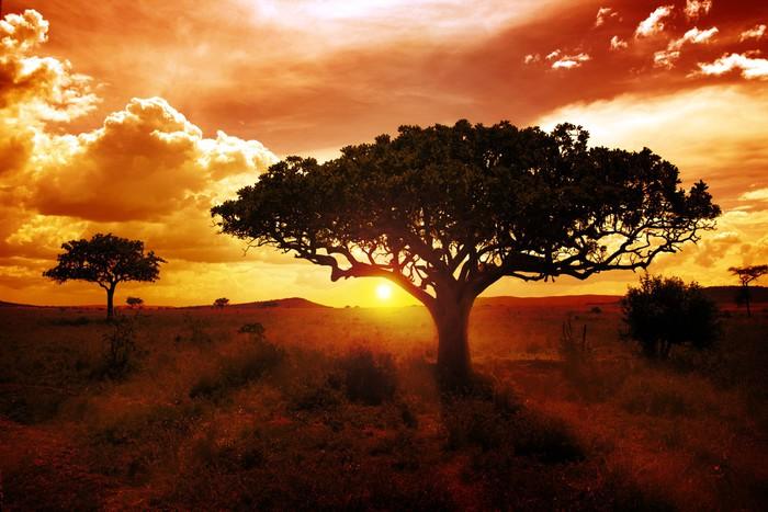 Vinylová Tapeta Africa sunset - Témata