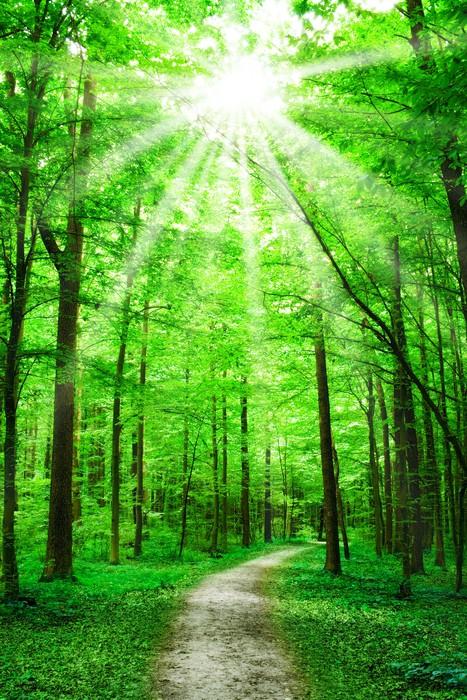 Pixerstick Aufkleber Natur. Weg im Wald mit Sonnenschein - Themen