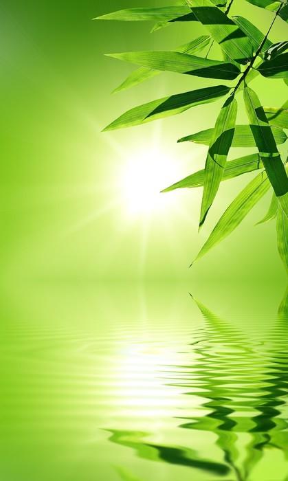 Poster Feuille de bambou avec reflet dans l'eau, ambiance zen. - Thèmes