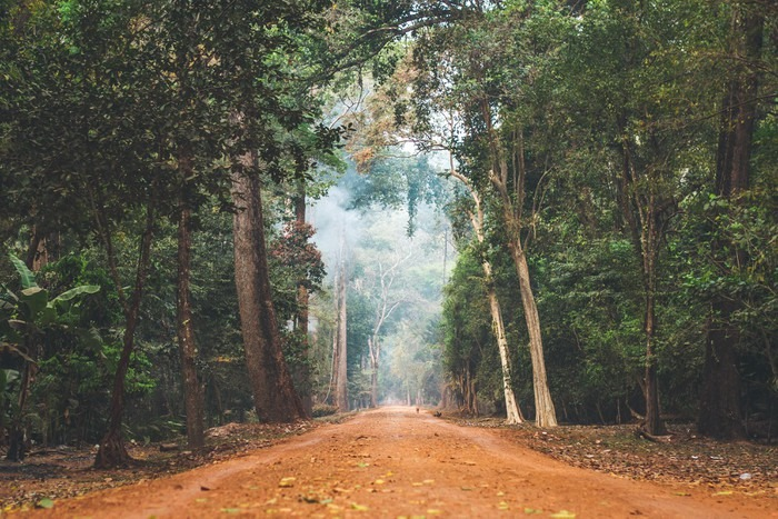 Dirt Road Stretching Through Cambodian Jungle Wall Mural