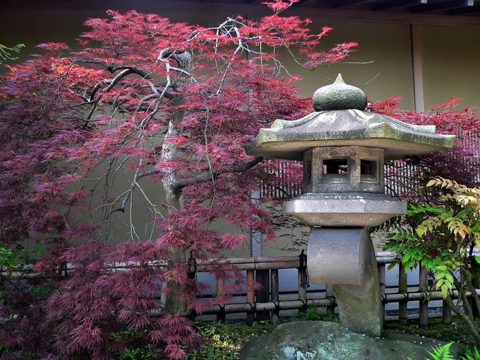 Vinylová Tapeta Japonske zahrady - iStaging