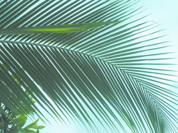 Vinylová Tapeta Feuille de palmier sur fond de ciel - Stromy