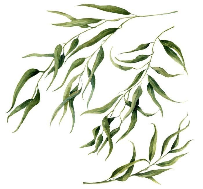 Papier peint motifs aquarelle feuilles d 39 eucalyptus - Branche d eucalyptus ...