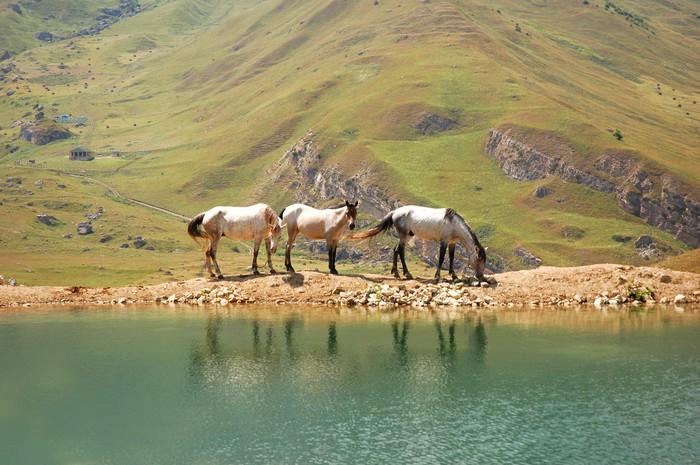 Vinylová Tapeta Tři koně u jezera - Evropa