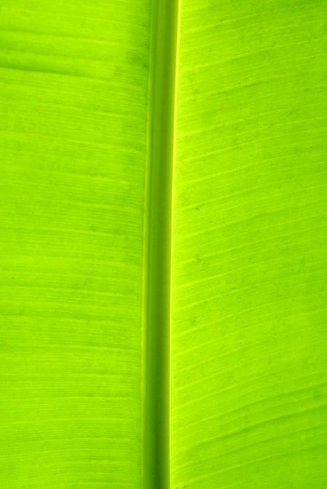 leaf of banana palm Sticker - Pixerstick - Seasons