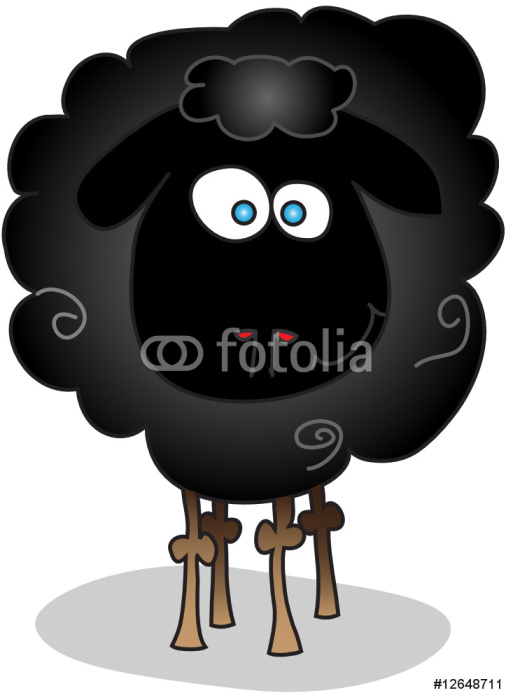 black sheep isolated