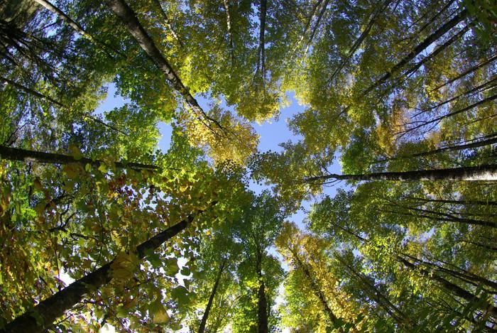 Fotomural Estándar Foret - Bosqes