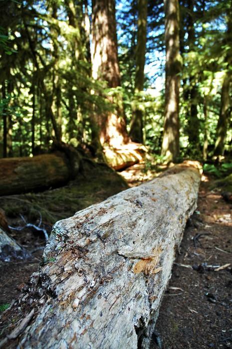 Vinylová Tapeta Hnití log - Přírodní krásy