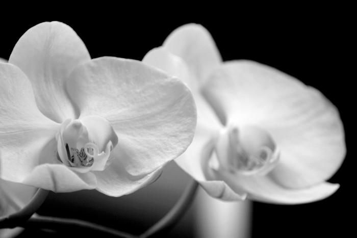 Vinylová Tapeta Orchideje-b - Témata