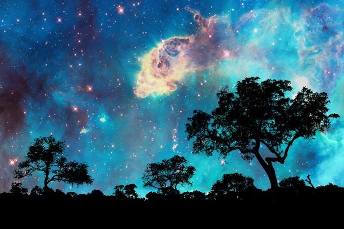 Poster paysage de nuit avec la silhouette des arbres et for Decoration murale nuit etoilee