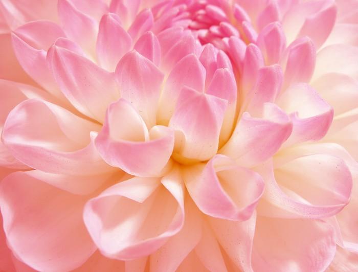 Tableau sur Toile Fine fleur rose - Thèmes