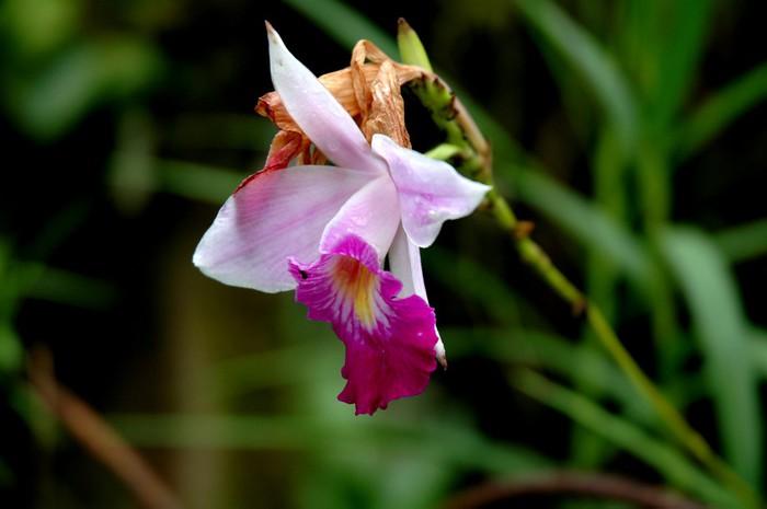Vinylová fototapeta Wild Orchid - Vinylová fototapeta