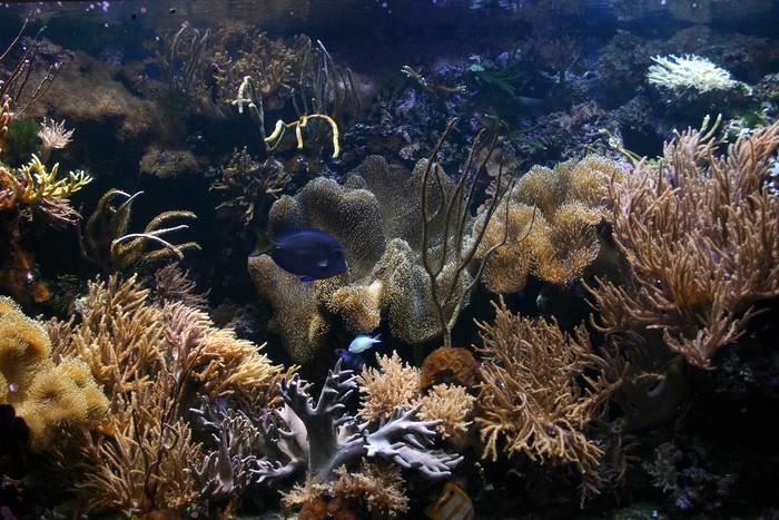 Vinylová Tapeta Exotické ryby nádrž 02 - Vodní a mořský život
