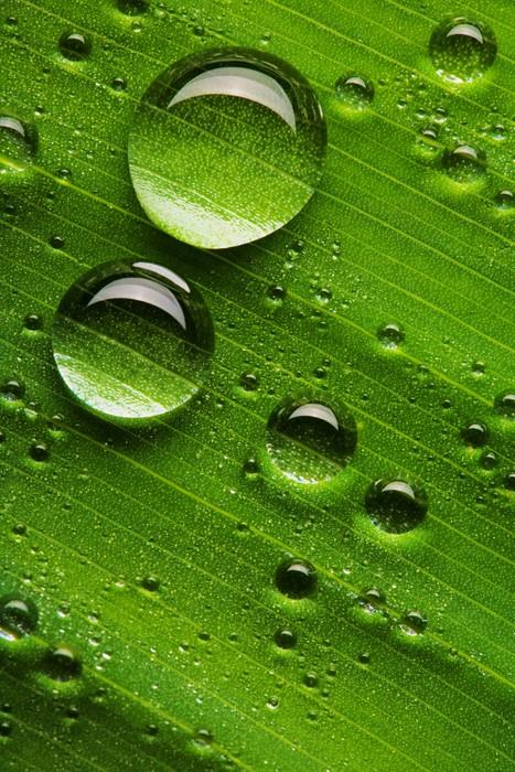 Vinylová Tapeta Kapky vody na čerstvý zelený list - Roční období