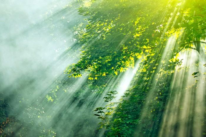 Vinylová Tapeta Slunečnímu záření mlha les - Roční období