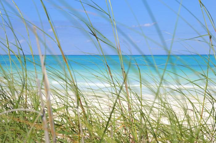 Vinylová Tapeta Tropické pláže a trávu - Voda