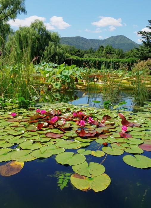 Fotomural estanque con lirio pixers vivimos para cambiar for Estanque ecologico
