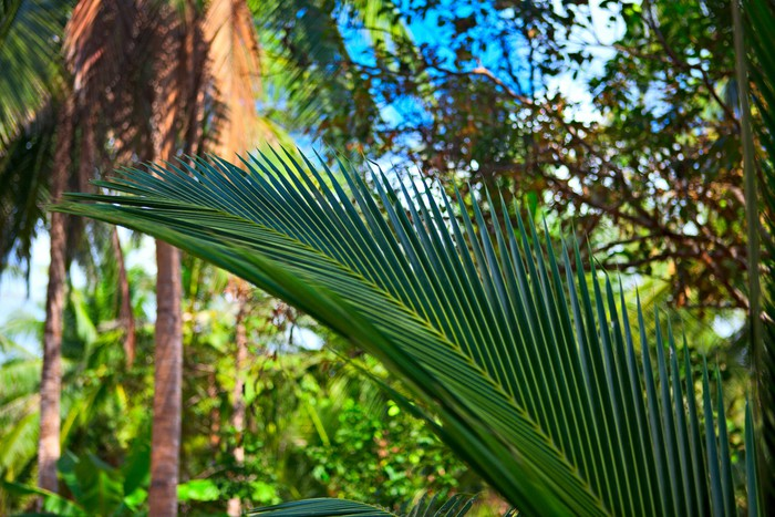 Carta Da Parati Foresta Tropicale : Carta da parati foresta tropicale u2022 pixers® viviamo per il cambiamento