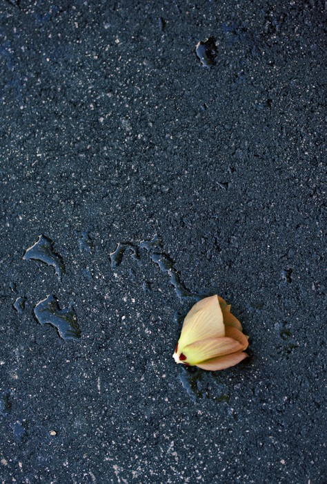Flower on the street asphalt after rain Vinyl Wallpaper - Other Feelings
