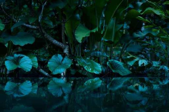 Papier Peint Vinyle Forêt tropicale avec miroir d'eau - Landscapes