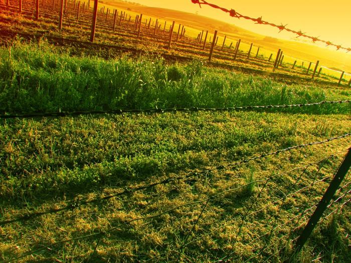 Vinylová Tapeta Západ slunce nad vinice - Roční období
