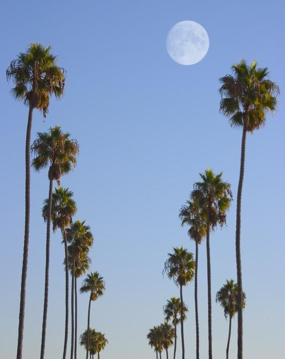 Obraz na Płótnie Hollywood raj - Palmy