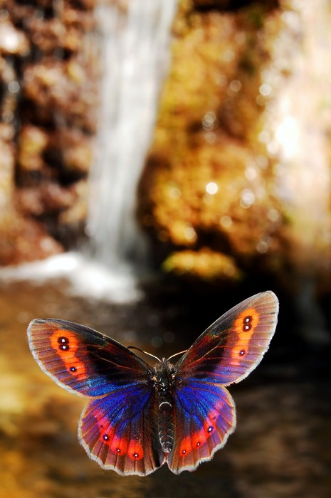 Vinylová Tapeta Motýl - Témata