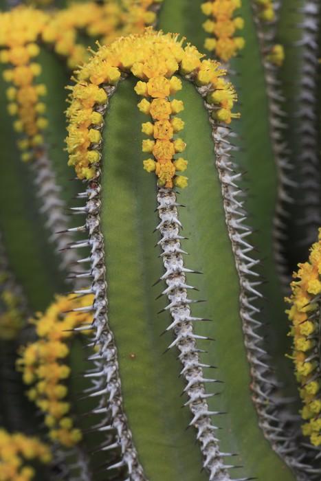 Vinylová Tapeta Euphorbia polycantha - Rostliny