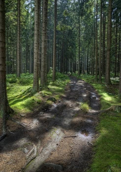 Vinylová Tapeta Cesta v lese - Lesy