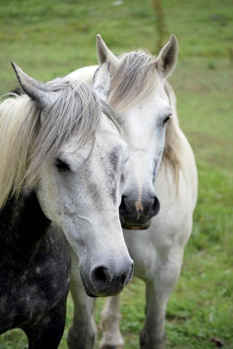 Vinylová Tapeta Dva koně - Témata