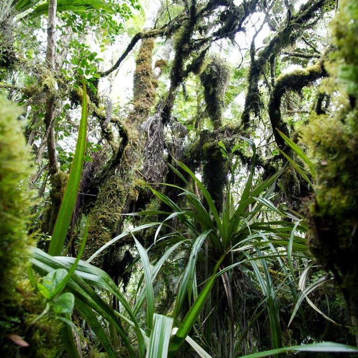 Papier Peint Vinyle Forêt tropicale humide. - Forêt