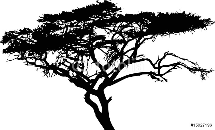 Fototapeta drzewa sawanny pixers yjemy by zmienia - Arbre africain en 7 lettres ...