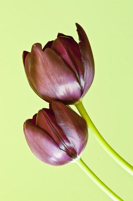 Vinylová Tapeta Tulipan - Domov a zahrada