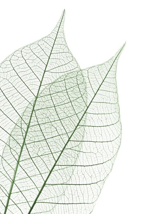 Vinylová Tapeta Skeleton Leaves - Struktury