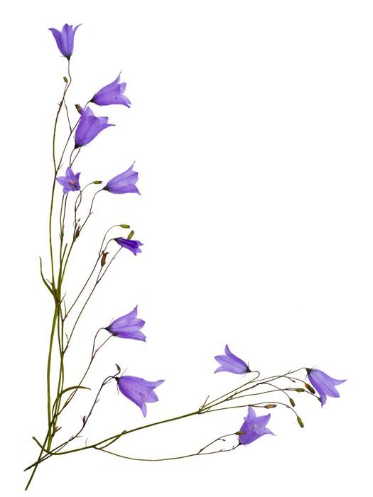 Vinylová Tapeta Bellflowers - Květiny