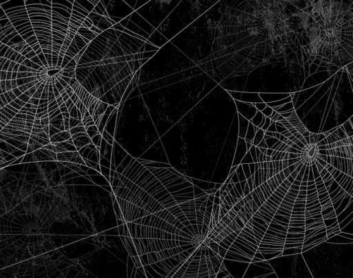 papier peint spider web silhouette contre le mur noir halloween th me fond sombre pixers. Black Bedroom Furniture Sets. Home Design Ideas