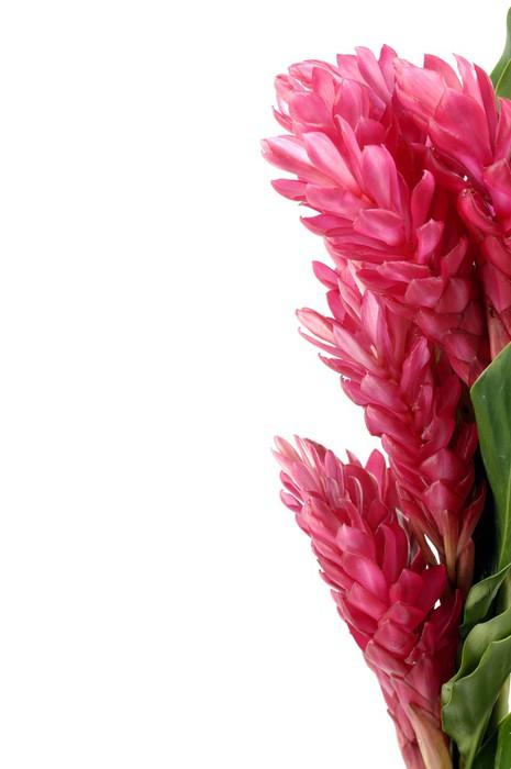 Vinylová Tapeta Hranice květ zázvor květiny - Květiny